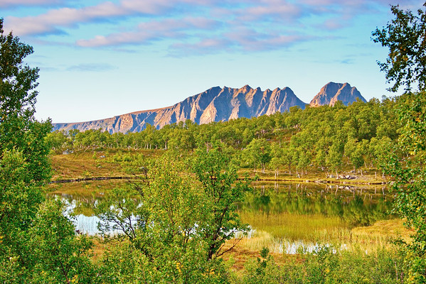 Forest lake in northern Norway