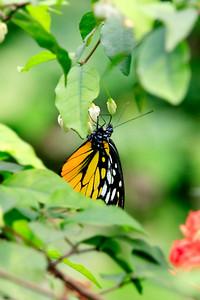 090620 KL Butterfly Park 21