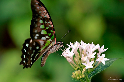090620 KL Butterfly Park 02
