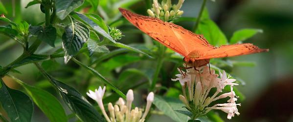 090620 KL Butterfly Park 07