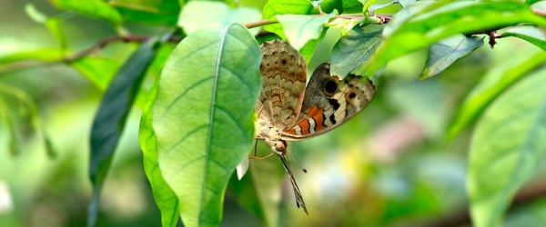 090620 KL Butterfly Park 19