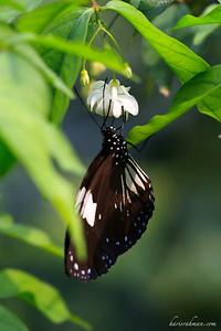 090620 KL Butterfly Park 17