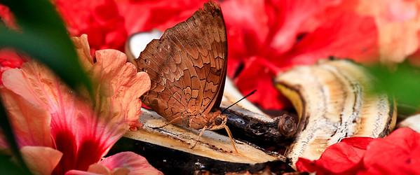 090620 KL Butterfly Park 08