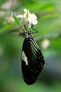 090620 KL Butterfly Park 20