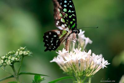 090620 KL Butterfly Park 03