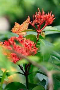 090620 KL Butterfly Park 18