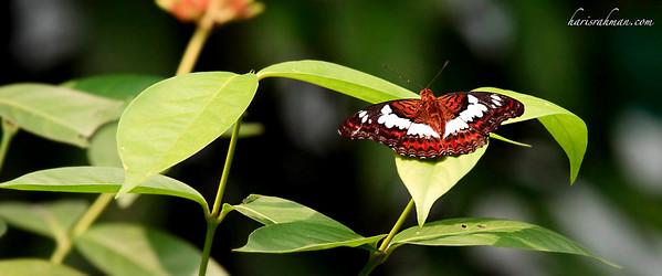 090620 KL Butterfly Park 09