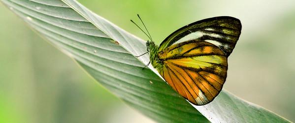 090620 KL Butterfly Park 13