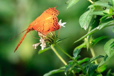 090620 KL Butterfly Park 04