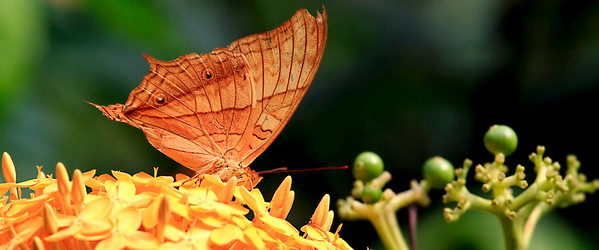 090620 KL Butterfly Park 15
