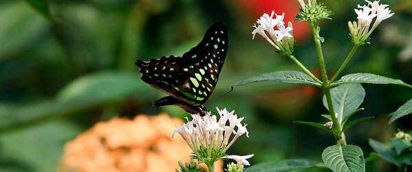 090620 KL Butterfly Park 11