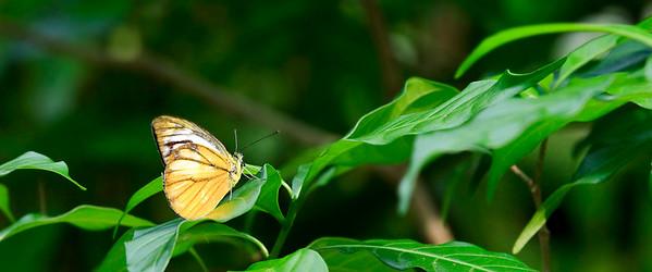 090620 KL Butterfly Park 12