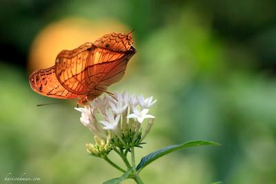 090620 KL Butterfly Park 05