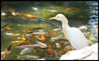 Trying out the E-M1 at Kuala Lumpur Bird Park