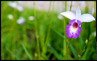 Trying out the E-M1 at Kuala Lumpur Orchid Park