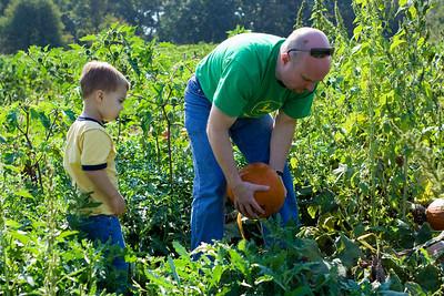 Dad retrieves the pumpkin that K.C. has picked.