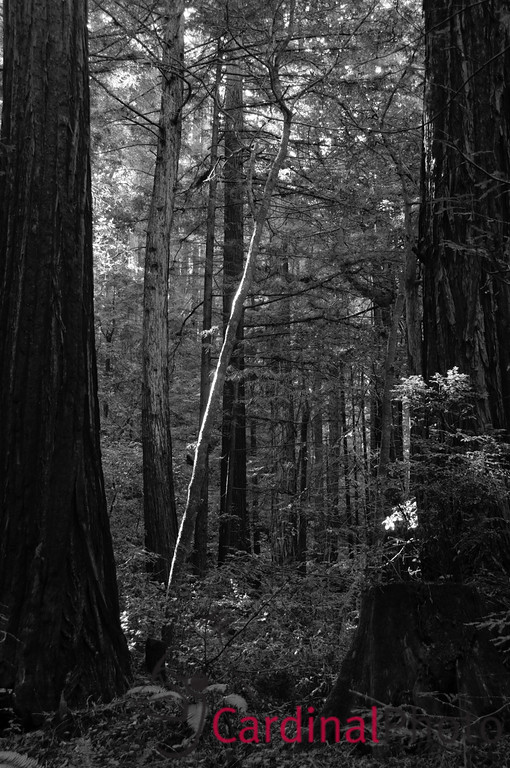 California Coastal Area 1/ 3s, at f/8 || E.Comp:-8 / 6 || 35mm || WB: AUTO 0. || ISO: 200 || Tone:  || Sharp:  || Camera: NIKON D300on: 2008:11:17 20:24:14