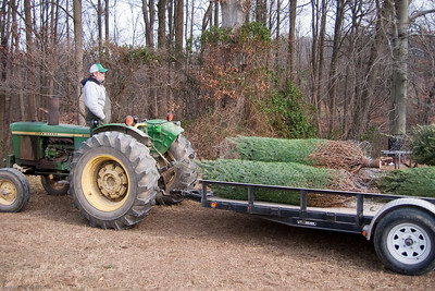 The wrapped trees are loaded onto the trailer.