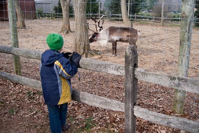 K.C. watches the reindeer.
