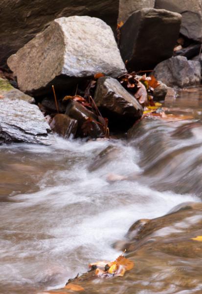 Scotts Run Nature Preserve