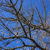 Branches of winter