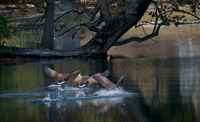 Spring Grove Fall