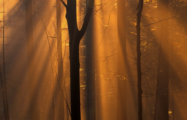 Magical light in a beech forest
