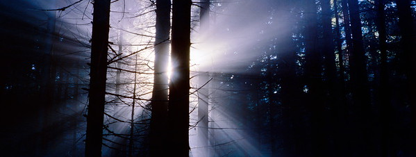 Rays of sunshine in a dark forest