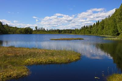 Idyllic forest lake in summer