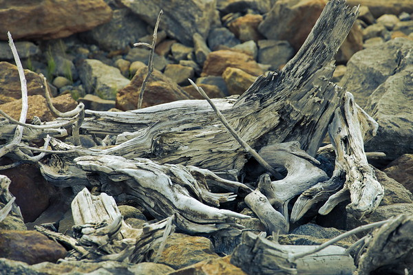 Driftwood at the shore of a lake