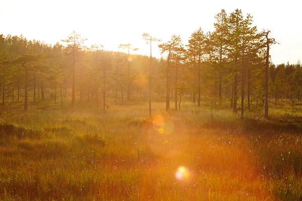 Myr nära Västeralnöbodarna - Evening sun shining over marshland