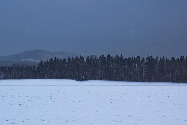 Det snöar i Skorped - Small hut in a snowy landscape at dusk