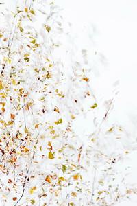 Abstrakt höstlöv - Birch twigs in autumn - multiple layers