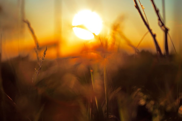Sommarkväll i Skeppsmalen - Grasses and summer sunset