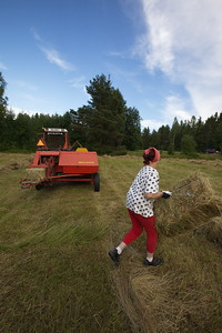 Höskörd i Vattugårrden - Farmer's wife working on a field gathering hay