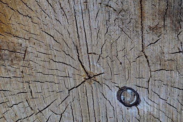 Närbild av kapad ved - Old log - close up