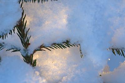 Tjock snö lilgger på träden - thick snow is covering a tree