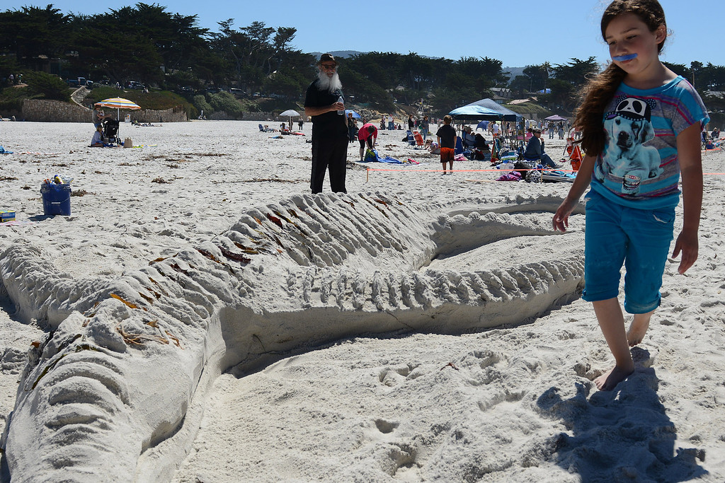 . Mustache Sand Castle Team member Deedee Ann Grijalva, 8, of Carmel walks past her team\'s crocodile during the Sand Castle Contest on Carmel Beach in Carmel, Calif. on Sunday September 15, 2013. (Photo David Royal/ Monterey County Herald)