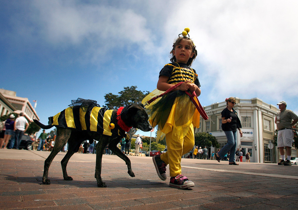 . Malika Shihadeh, 4, and her dog Rocco, 10, dress in bee costumes during The Feast of Lanterns Pet Parade in downtown Pacific Grove, Calif. on Friday July 26, 2013.  (Photo David Royal/ Monterey County Herald)