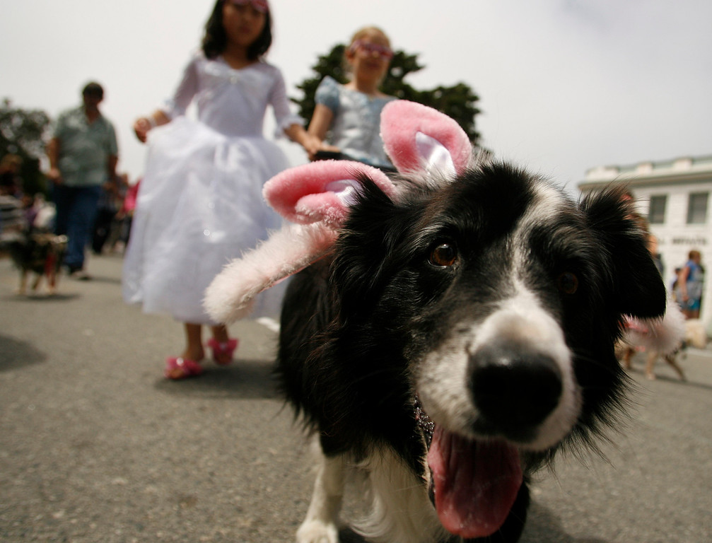 . Scout, who was dressed as a fairy princess, leads Hope Prince, 9, left, and Jessica Badiny, 8, walk  during The Feast of Lanterns Pet Parade in downtown Pacific Grove, Calif. on Friday July 26, 2013.  (Photo David Royal/ Monterey County Herald)