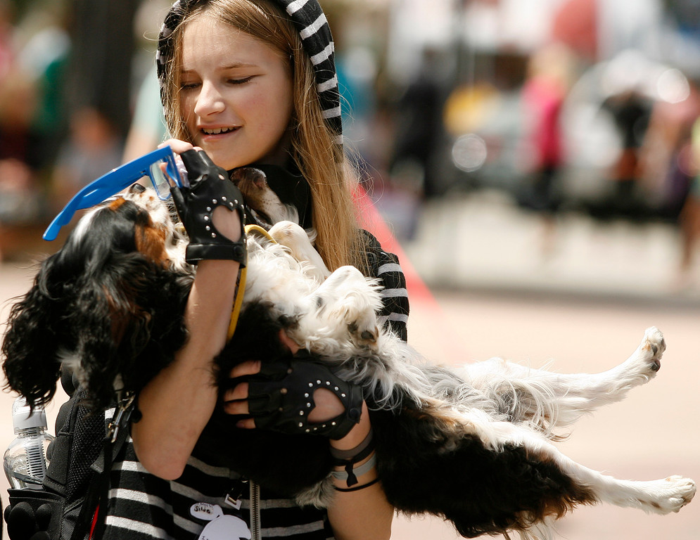 . Sabrina McCreary, 13, slipped glasses onto Isis, her Cavalier King Charles Spaniel during The Feast of Lanterns Pet Parade in downtown Pacific Grove, Calif. on Friday July 26, 2013.  (Photo David Royal/ Monterey County Herald)