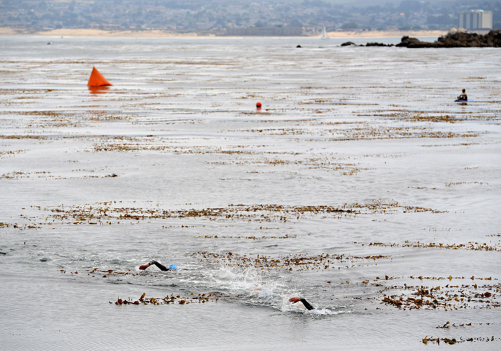 . Swimmers make their way through the course at Lovers Point during the Elite Race at the Pacific Grove Triathlon in Pacific Grove, Calif. on Saturday September 14, 2013.  Photo David Royal/ Monterey County Herald)