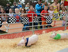 Pig Races Monterey County Fair