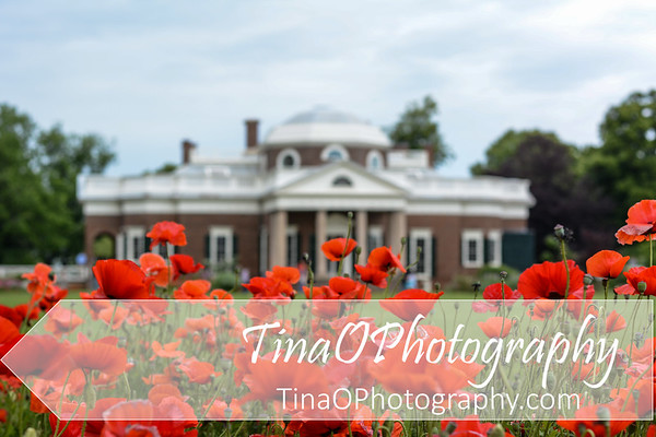 Monticello with Poppies