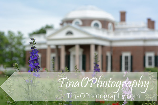 Monticello with Foxglove