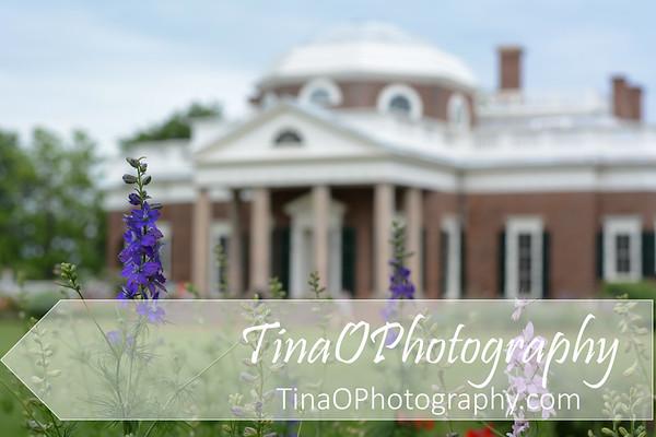 Monticello with Foxglove
