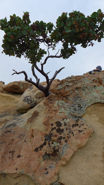 Lizard's Mouth area, Santa Barbara, 2015.