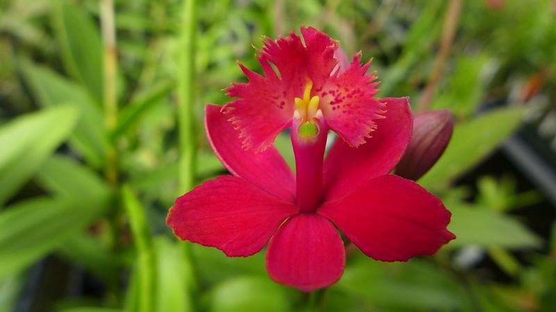 Cal-Orchid, Santa Barbara, California