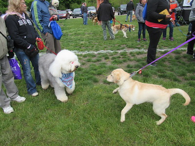 A golden retriever attempts to make a new friend at the Mutt Strut and Pet Expo May 14.