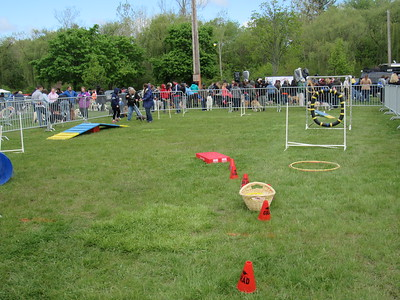Many games were offered at the Mutt Strut, including a doggie obstacle course.